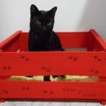 Como customizar caixa para gatos