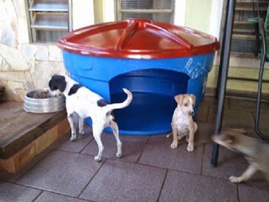 como fazer caminhas e casinhas diferentes para pets, gato, cachorro