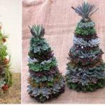 Árvore de Natal de Suculentas